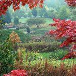 Festiwal Traw i Kwiatów Jesieni